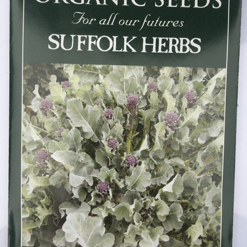 Organic Broccoli Seeds – Purple Sprouting Santee