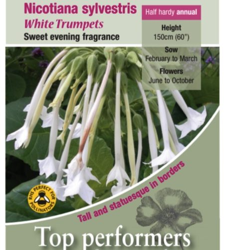 Nicotiana White Trumpets