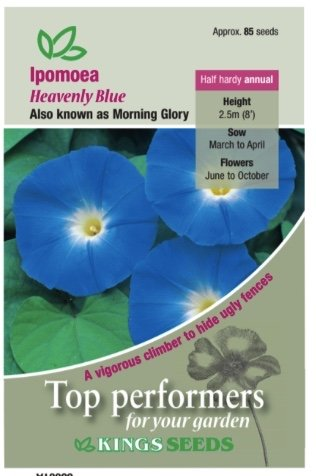 Ipomoea – Heavenly blue seeds