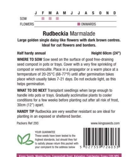 Rudbekia – Marmalade