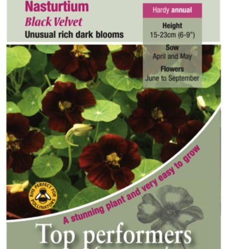 Nasturtium Black Velvet