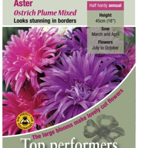 Aster Ostrich Plume Mixed Seeds