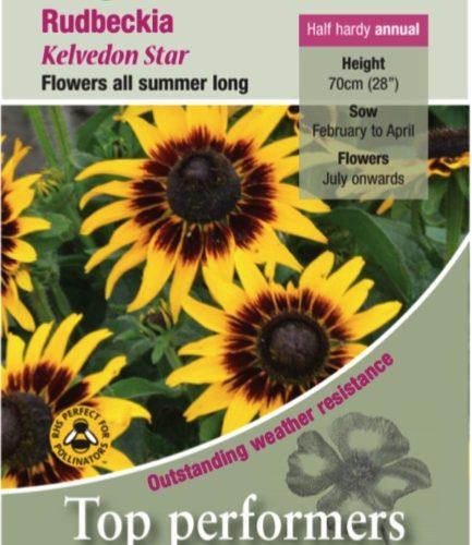Rudbeckia – Hirta Kelvedon Star