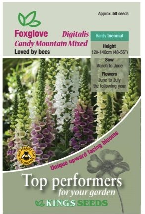 Foxglove – Candy Mountain Mixed Seeds