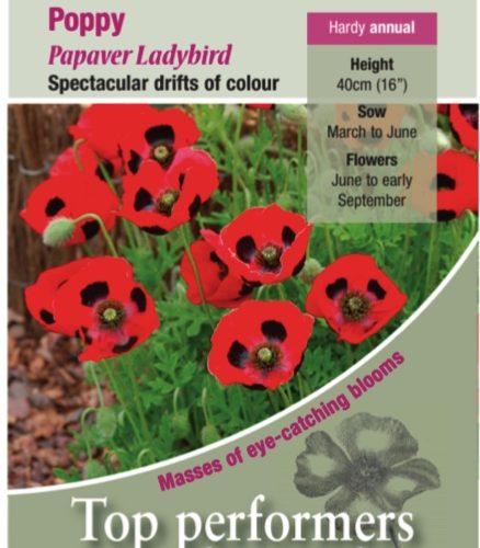 Poppy – Ladybird