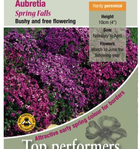 Aubrietia Spring Falls