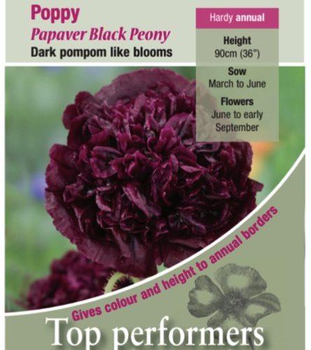 Poppy – Black Peony