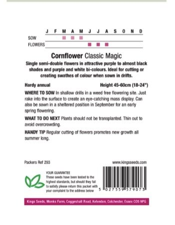 Cornflower Classic Magic