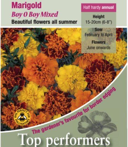 Marigold – French, Boy o Boy Mixed