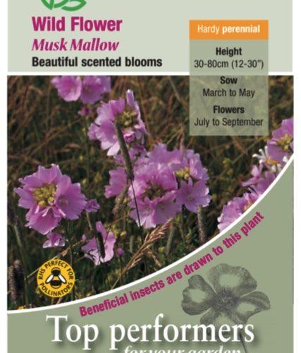 Wildflower – Musk Mallow