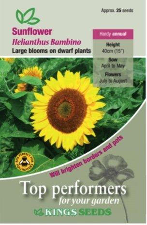 Sunflower – Bambino