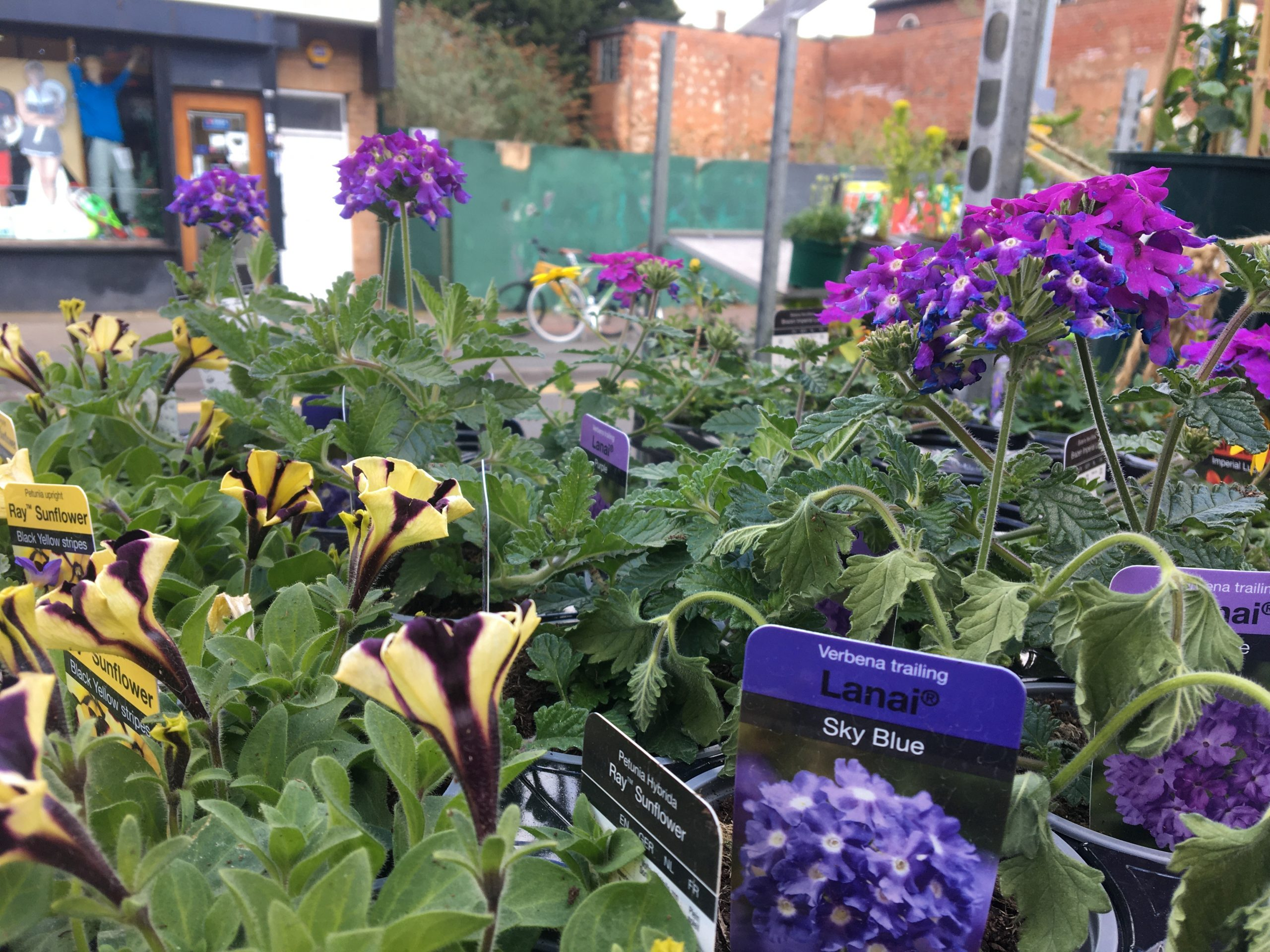 You are currently viewing April at the Kitchen Garden….