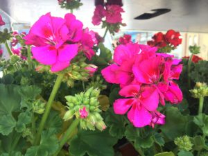 Read more about the article June at the Kitchen Garden….